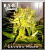 B-S-B Genetics Lemon Haze Female 5 Seeds